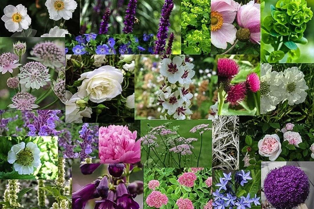 moodboard garden design devizes