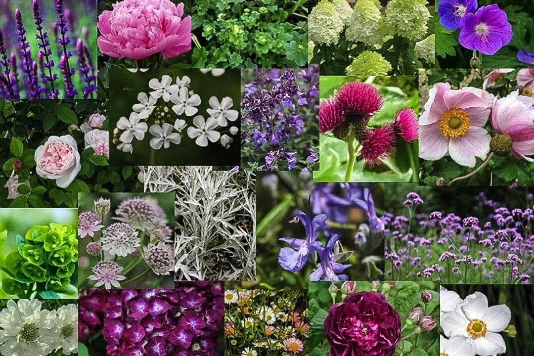 herbaceous borders hilmarton garden