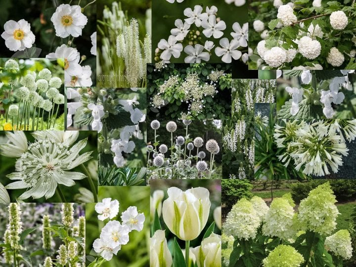Mood board white garden