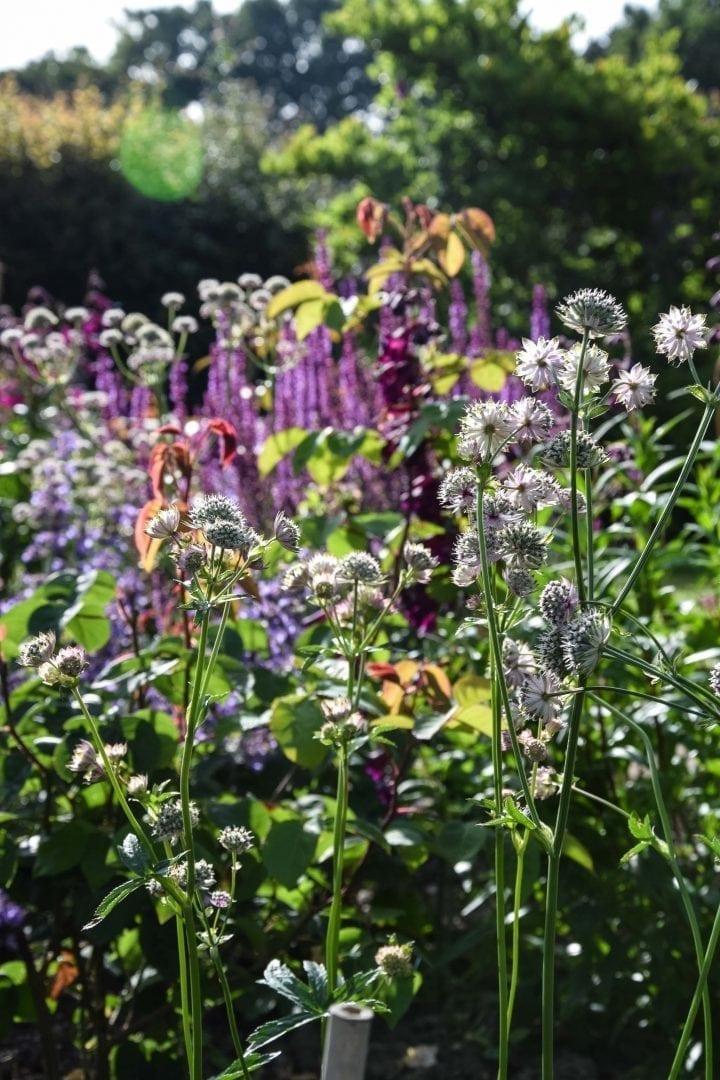garden boarders beneden